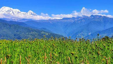 Photo of किसानको पिडा : न खेतका धानमा दाना लाग्ने भो, न त बारीको कोदो नै रह्यो